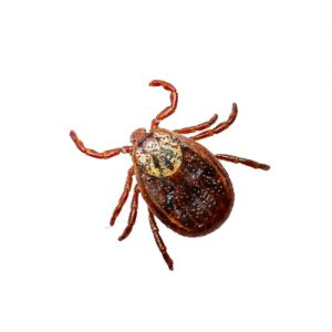 tick removal peterborough