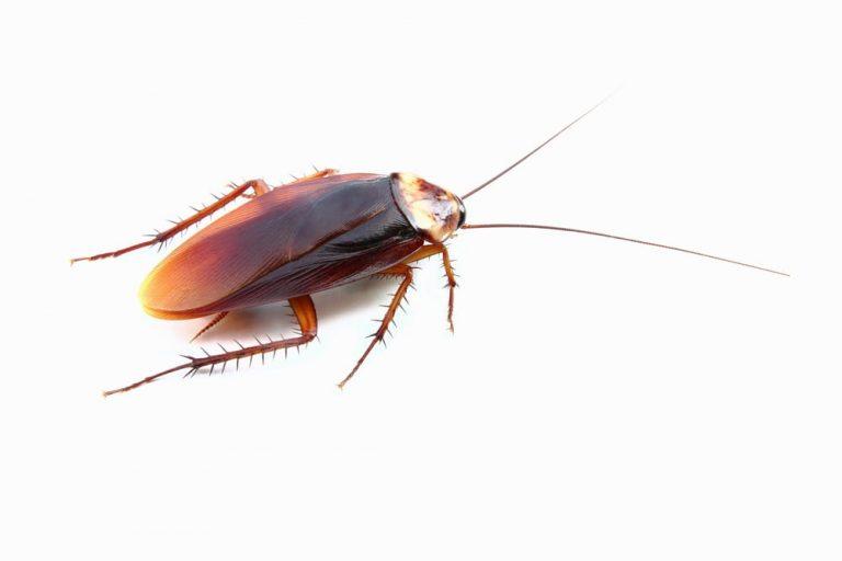 cockroach exterminator peterborough