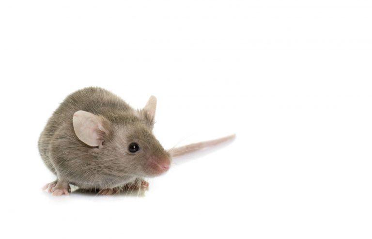 mouse exterminator peterborough