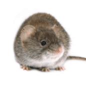 mouse treatment pest control peterborough