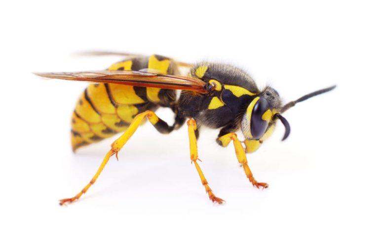 wasp removal Peterborough