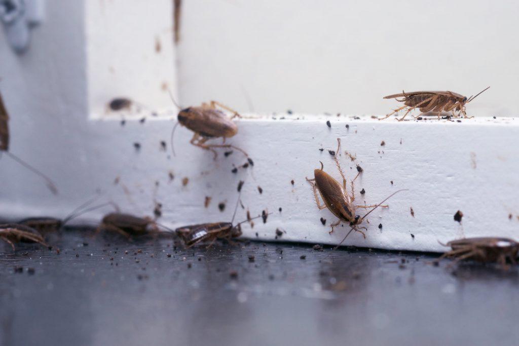 Cockroach Infestation Health Risks