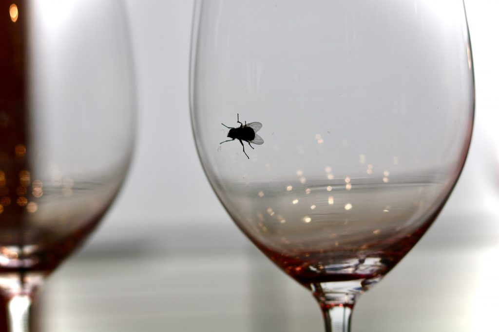 How to Prevent Flies in your Commercial Kitchen