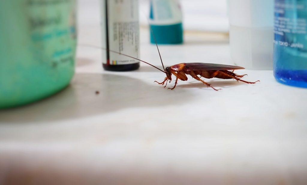 The Best Way to Get Rid of Cockroach Infestation