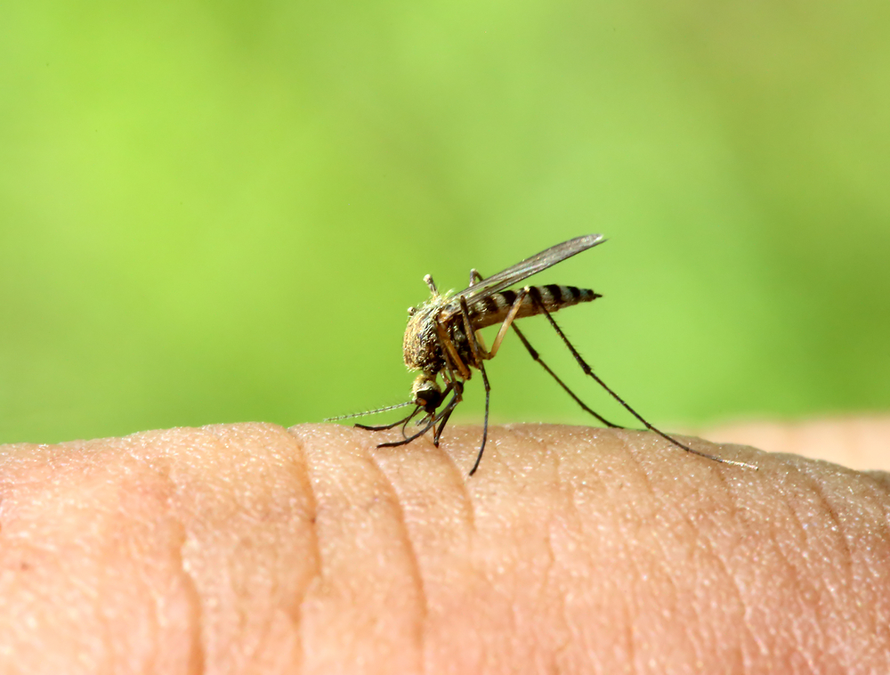 Controlling Mosquitoes at Home