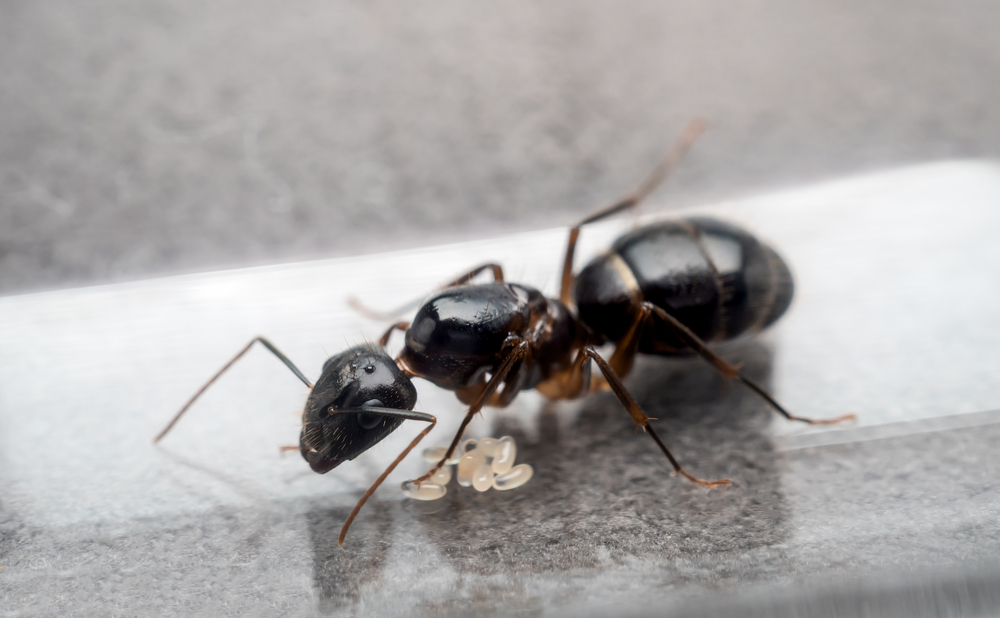 The Differences Between Termites and Carpenter Ants
